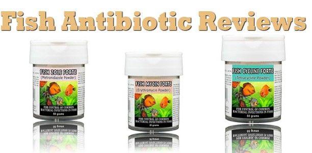 Fish Antibiotic Reviews