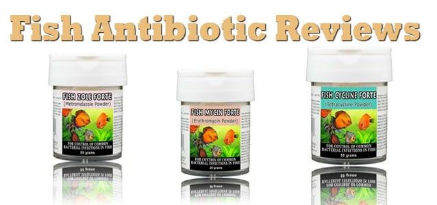 Fish antibiotics where to get them how to use them do for Fish sulfa forte