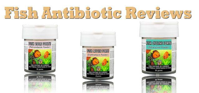 Fish antibiotic reviews read customer reviews of fish for Kanamycin for fish